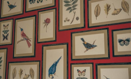 Framed flora and fauna drawings, Darwin's Townhouse