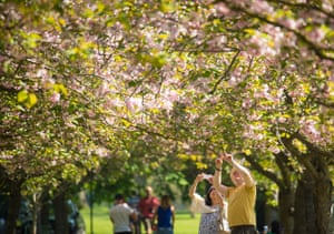 People look at cherry trees in blossom in Greenwich Park.