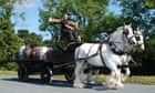 Brewery uses horse and cart to deliver beer to homes during lockdown thumbnail