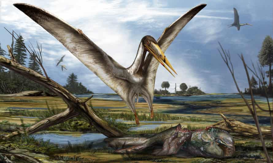 The pterosaur would have resembled the alanqa, above, which also has a broad wing span and sharp beak.
