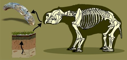 Chemical elements from the soil and water become incorporated in Diprotodon's teeth