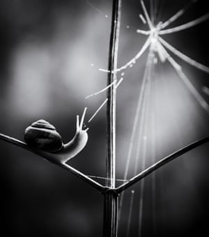 """Paula Cooper, black and white category winner: Web of Life, Thetford Forest, Norfolk """"I took this on a very misty day in Thetford Forest. It was too misty to photograph the trees so I tried looking for something closer up; I spotted this little snail making its way up a plant stem. I was lucky that at the moment I took this image the snail looked up towards the spider web."""""""