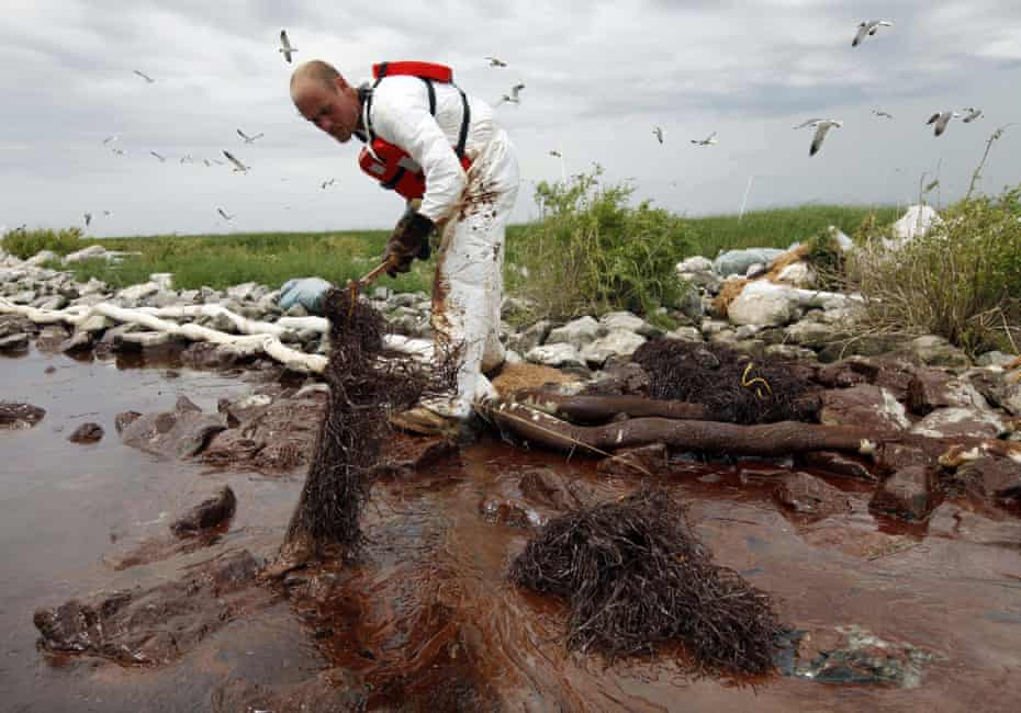 In this 4 June 2010 photo, a worker picks up blobs of oil with absorbent snare on Queen Bess Island at the mouth of Barataria Bay near the Gulf of Mexico in Plaquemines Parish, Louisiana.