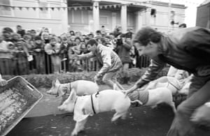 Pig racing in Ireland, 25 April 1989. (Archive ref. GUA/6/9/2/1/1).   '