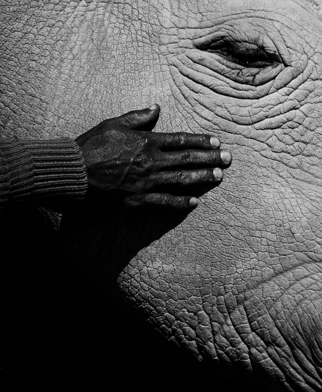 Ol Pejeta Conservancy in Kenya is one of the largest rhinoceros sanctuaries in the world and home to Najin and Fatu, a mother and daughter who are the last living northern white rhinos in existence. Jack Davison's Ol Pejeta is published by Loose Joints. Sales of the book will raise funds for those trying to save the rhino species. All photographs: Jack Davison