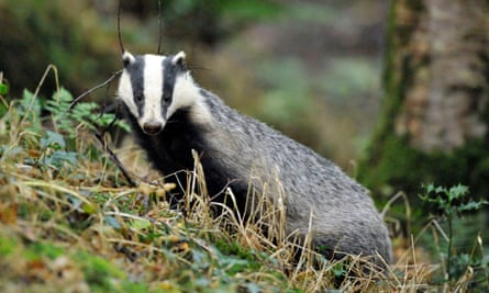 In all, there were 21 cull zones in England in 2017 involving seven police force areas.