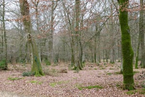 Woodland in winter at South Oakley, in the New Forest.