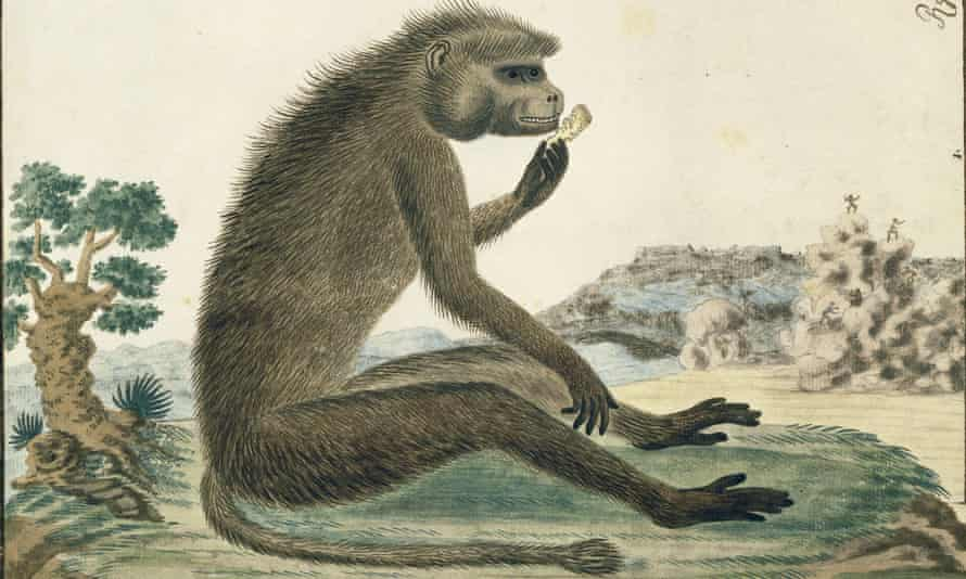 Fred the baboon was never so happy as when he was sitting in the back seat of a stranger's car, his mouth filled with more fruit than he could chew.