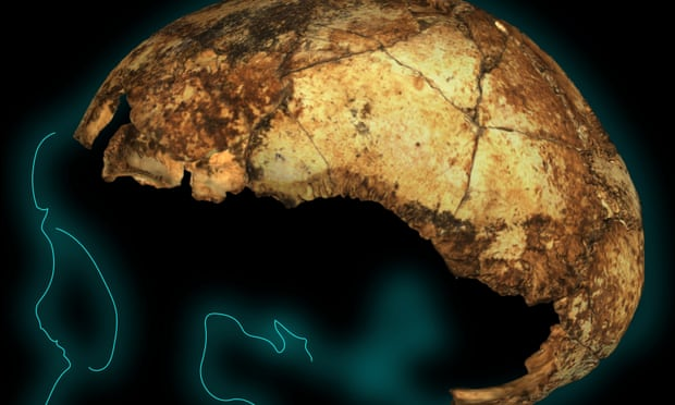 Homo erectus cranium outline. The earliest known skull of Homo erectus has been unearthed by an Australian-led team in South Africa. Photograph: Supplied by La Trobe University