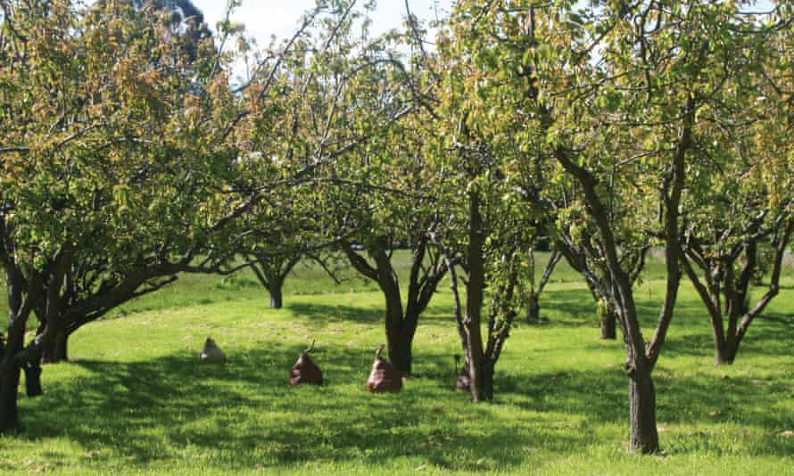 Giant pear sculptures sit under trees in an orchard on Birch's Bay sculpture trail