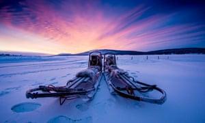 Purple reins: dog sleds.