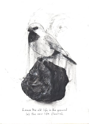 a finch on a lump of coal