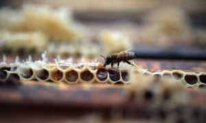 Organic honey is now Cuba's fourth biggest agricultural export – ahead of the more traditional sugar and coffee – and local producers hope that with investment they could expand markedly.