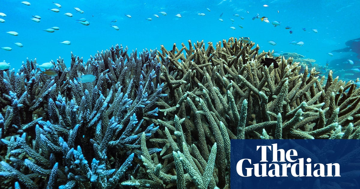 great barrier reef inquiry officials refuse to answer questions