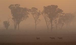Bushfire smoke blankets the morning sky in Glen Innes, NSW, on 11 November