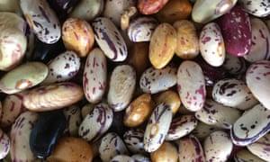 Jersey Grex beans.