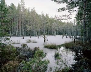 Luke Brown's Abernethy Forest