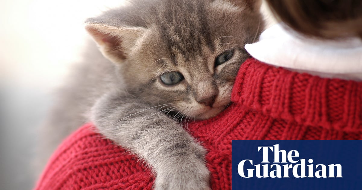 'He brought me a tissue when I was ill': the moment readers realised their cat loves them
