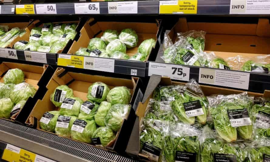 Lettuces on Sainsbury supermarket shelves