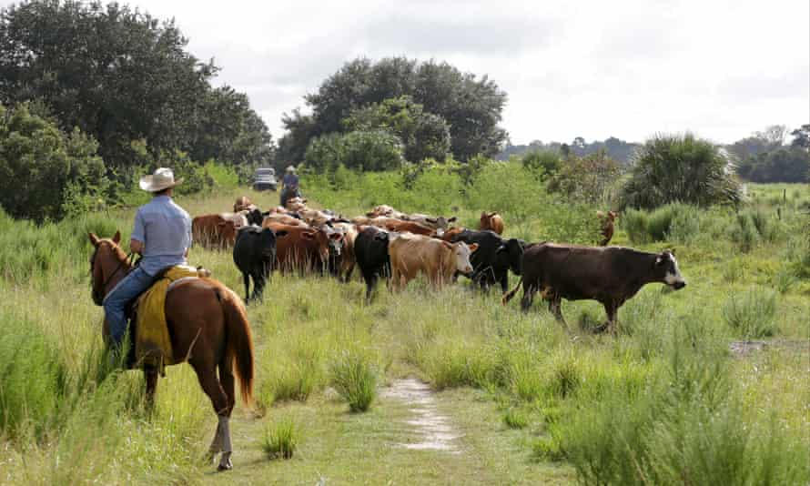 The Deseret Ranch in central Florida