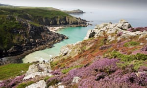 Heather and Gorse flowering on the cliff tops at Zennor in Cornwall, UK, looking down on Pendour Cove
