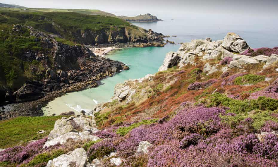 Heather flowering on the cliff tops at Zennor in Cornwall, UK, looking down on Pendour Cove