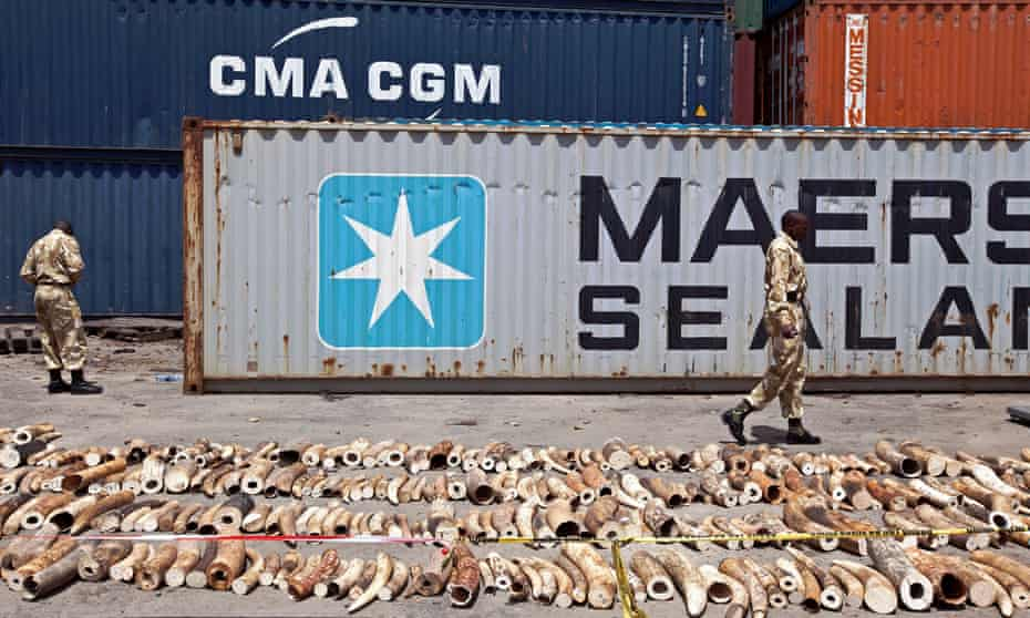 A container intercepted in Kenya in 2013 that was found to have ivory inside.