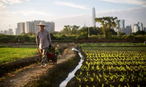 A farmer at work near the village of Lok Ma Chau, outside Shenzhen, Hong Kong.