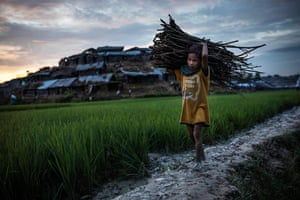 A young Rohingya refugee gathers firewood after arriving in Whaikhyang from Myanmar