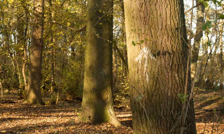 An arrow in the Bedfordshire woods marks the way to the secret playground