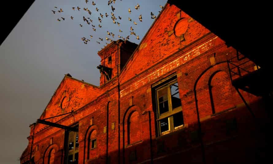Birds fly out of the derelict former ice factory in the old Fish Docks in Grimsby.