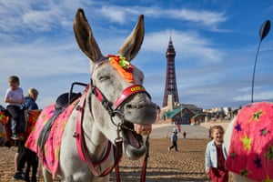 Sue Taylor's donkey on the beach in July