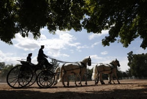 Horses pull a carriage at the farm