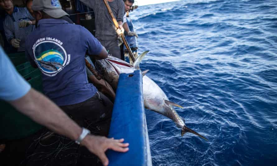 Tuna fishing is big business in the Pacific, but it often reels in protected species such as sharks, turtles and reef fish, which fishing crews aren't allowed to keep and must toss them back to sea. In this photo, the crew is hauling in a tuna.