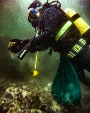 Abalone poaching