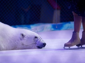 With everyone now wanting a digital souvenir, wildlife tourism has changed dramatically, but behind the scenes animals continue to be exploited for the entertainment of tourists. Here we see a polar bear with trainer Yulia Denisenko in Kazan, Russia. The polar bear circus is thought to be the only circus in the world with performing polar bears. The entire show is on ice and the bears are muzzled
