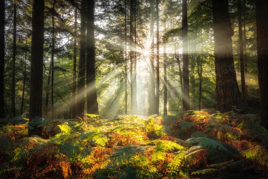 Bolderwood, New Forest National Park, Hampshire, England, UK.
