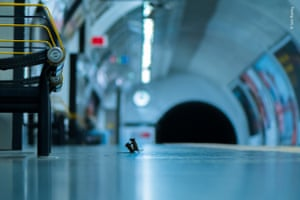 Station Squabble by Sam Rowley (UK). Two mice fight over food at an underground station