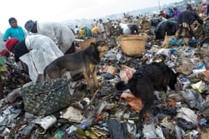 Dogs sniff through the rubbish during a downpour