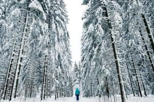 Walk through a snowy forest