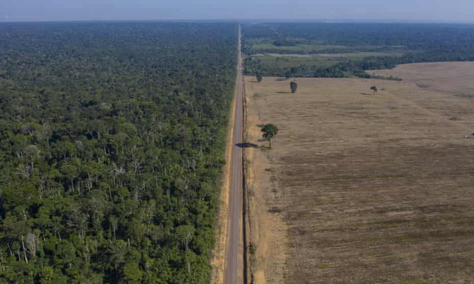 'Today, almost 15% of the Amazon rainforest has already been deforested. When this number reaches 20%, the entire Amazonian system will collapse.'