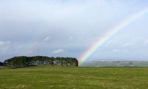 Rainbows arc above a wood