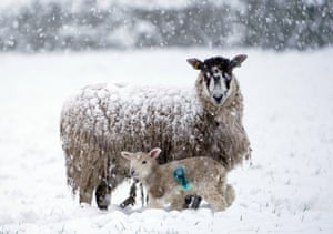 Northumberland, UK A newborn lamb with its mother in a snow-covered field near Allendale, as snow hits Britain during a cold spring snap