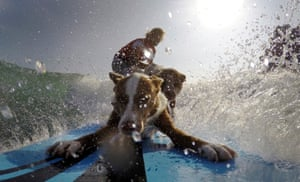 Australian dog trainer and former surfing champion Chris de Aboitiz rides a wave with his dogs Rama and Millie off Palm Beach