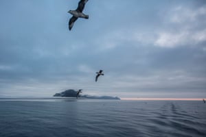 Fulmar gulls fly around the north tip of Prins Karls Forland island, West Svalbard, Norway