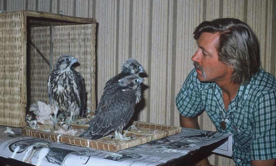 In 1981 Peter Whitehead went to work with a falcon-breeding centre in Saudi Arabia