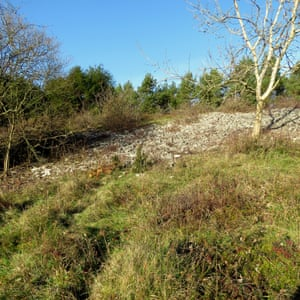 Mounds of bell heather in limestone heath at Goblin Combe.