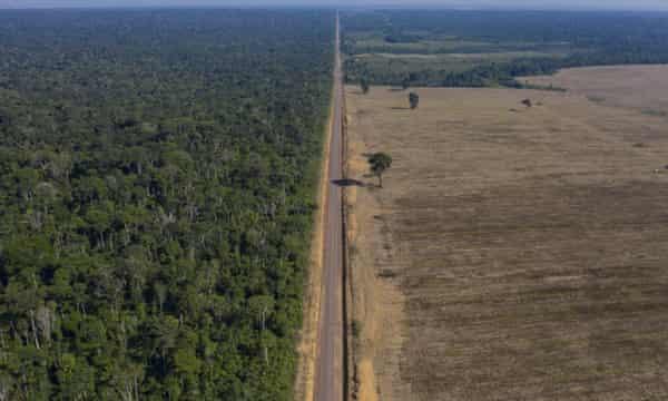 Deforestation for soy farming