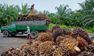 Plantation workers prepare to unload freshly harvested oil palm fruit bunches at a collection point