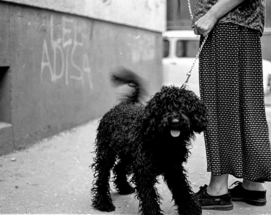 Dog in Sarajevo, August 1997.
